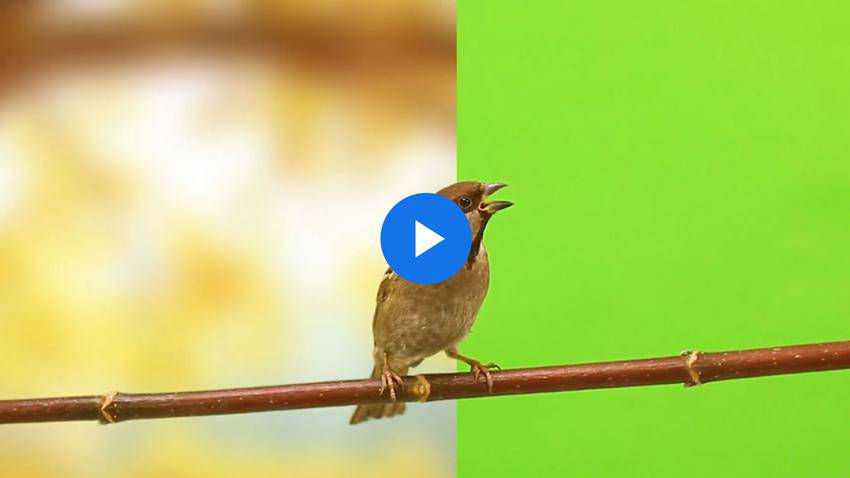 How to Create a Photographic Background for Green Screen Footage